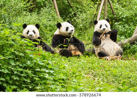 the great zoo of china epub download